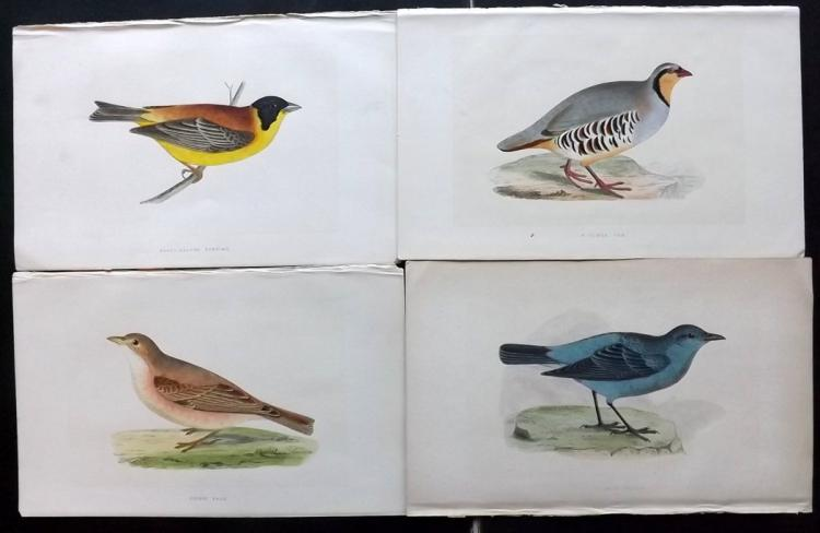 Morris, Rev. Francis Orpen 1850's Lot of 8 Hand Coloured Bird Prints