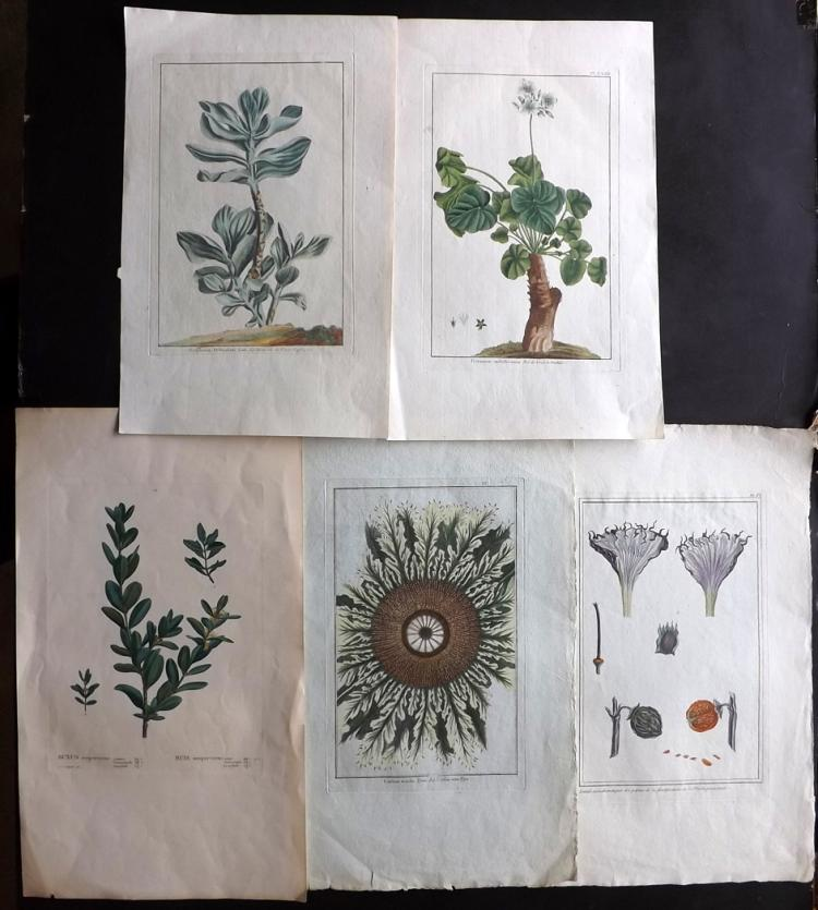 Botanical 1783-1800 Group of 5 Hand Coloured Prints by Redoute & Buchoz