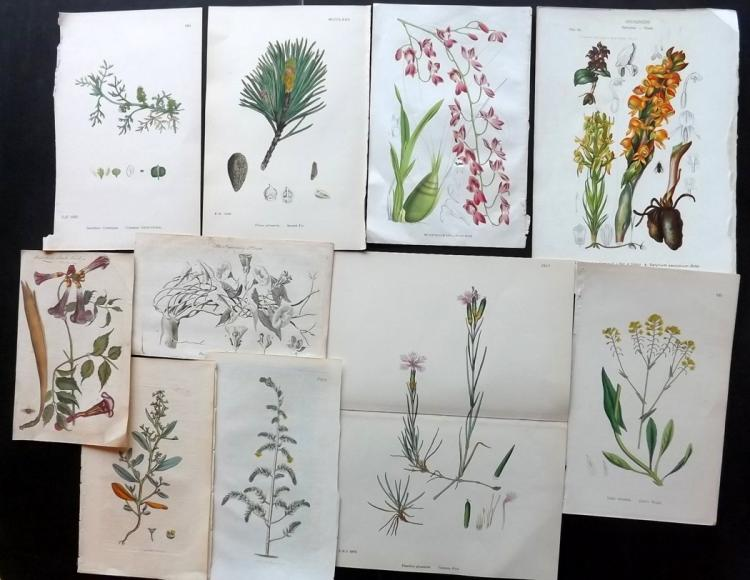 Botanical Prints C1760-1890's Lot of 18 Prints