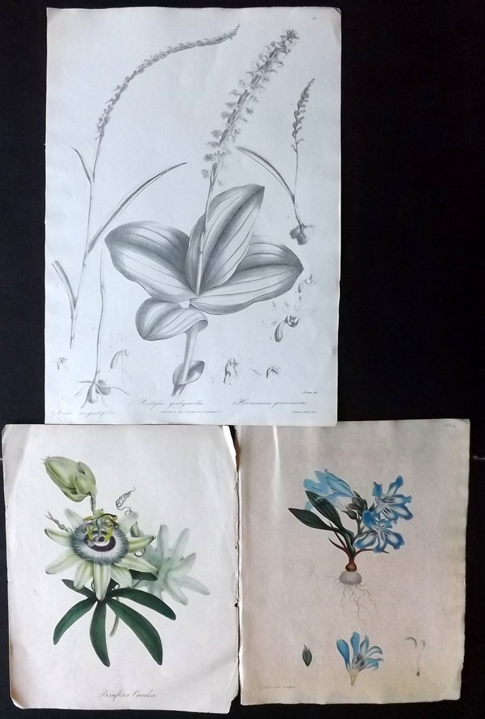 Botanical Prints C1800-42 Group of 3, including Passion Flower