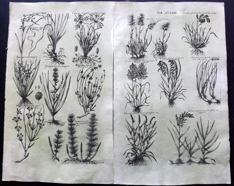 de Bry, Johann Theodor 1641 Pair of Botanical Prints