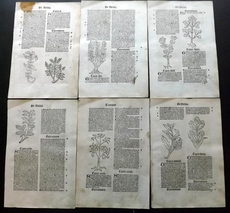Hortus Sanitatis 1517 Group of 6 Medieval Botanical Woodcut Leafs