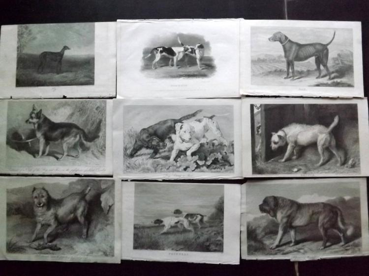 Dogs C1820 Lot of 11 Prints from the Sporting Magazine