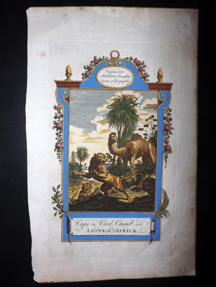 Middleton, Charles Theodore 1779 Hand Coloured Print of Cape de Verd Camel and Lions of Africa