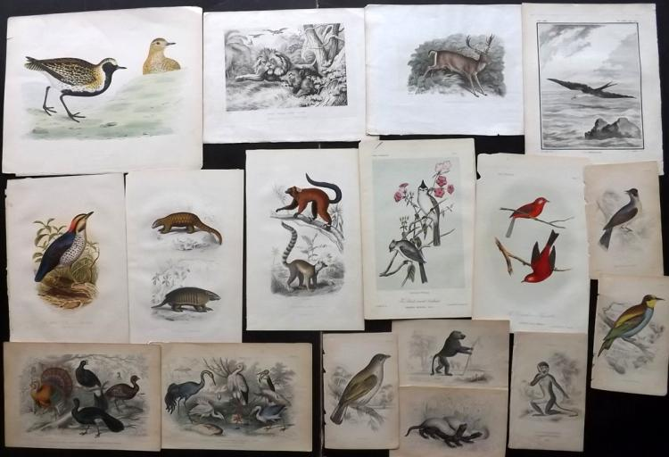 Natural History & Birds C1770-1870 Lot of 30 Prints