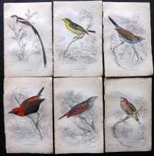 Jardine, William C1840 Lot of 6 Hand Coloured Bird Prints