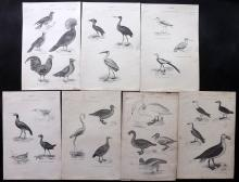 Richardson, John 1862 Lot of 7 Bird Prints