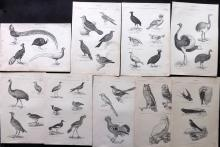 Richardson, John 1862 Lot of 9 Bird Prints. Owls etc