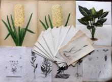 Botanical Prints 19th Century Lot of 17