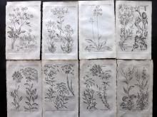 Hill, John & Culpeper, Nicholas 1792 Lot of 8 Botanical Prints