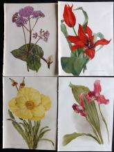 Moon, H. G. 1903 Group of 4 Botanical Prints from Flora and Sylva. Tulip etc