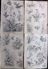 Ryan, Henry 1878 Group of 4 Botanical Prints