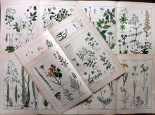 Schubert, Gotthilf Heinrich von 1882 Group of 6 Large Botanical Prints