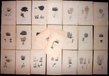 Sowerby, James 1846 Lot of 26 Hand Coloured Aquatic Plants & Lichens