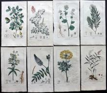 Turpin, Pierre Jean Francois C1815 Group of 8 Botanical Prints from Flore Medicale