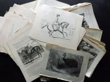 Natural History & Birds 19th Century Lot of 400 Sheets of Wood Engravings