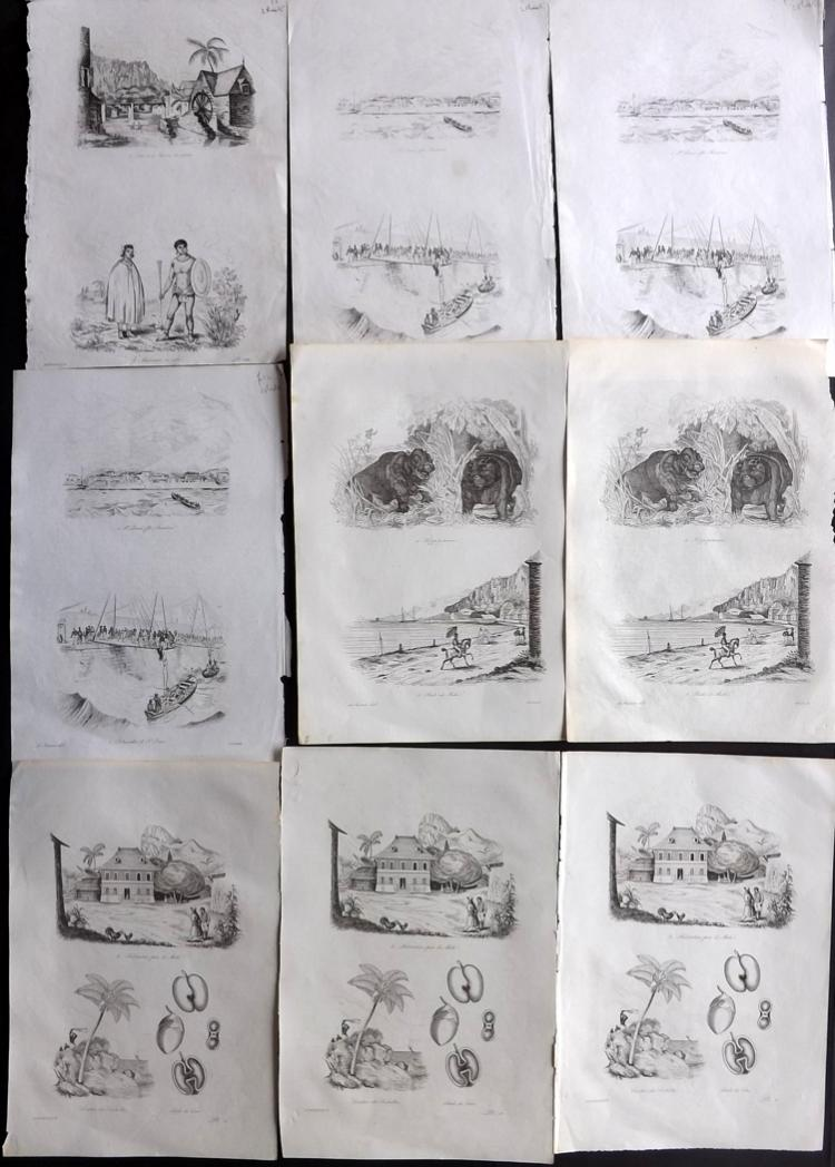 Seychelles & Reunion 1834 Lot of 9 Sheets of Etchings by d'Urville. Duplicated
