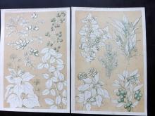 Jones, Owen 1856 Group of 4 Architectural Design Prints. Leaves Botanical