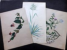 Botanical Watercolours. Late 19th Century, Group of 3, French