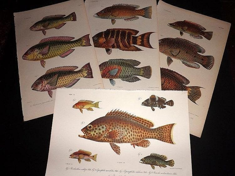 Bleeker, Pieter C1870 Lot of 10 Folio Fish Prints