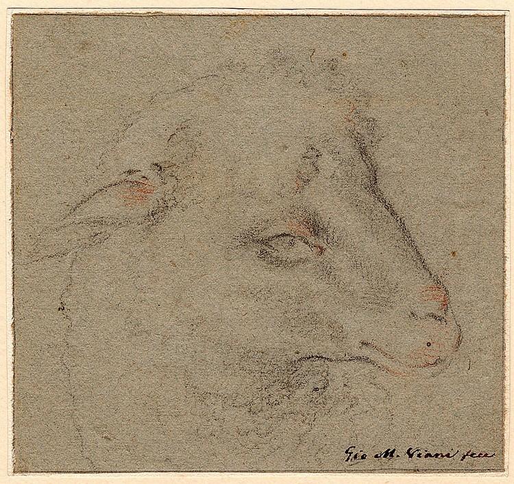 Giovanni Maria Viani (Bologa 1636 - Pistoia 1700) Study of a Lamb