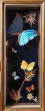Spécimens de Papillons naturalisés: