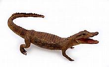 Taxidermised crocodile