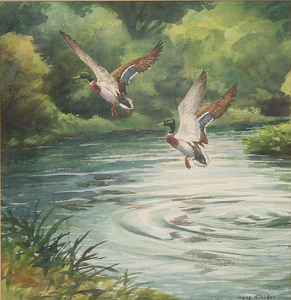 Hans Kleiber Watercolor Mallard Ducks in Flight