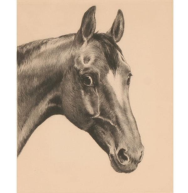 Kurt M Eberhardt Horse Etching Franz Hanfstaengl