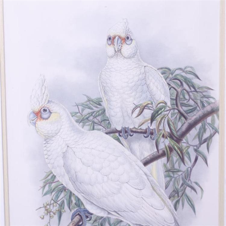 Antique Cockatoo Parrot 114