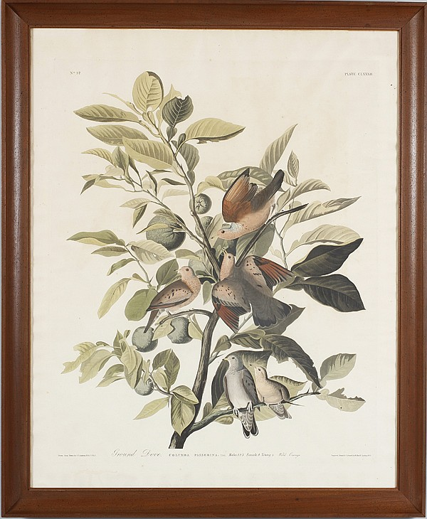 John James Audubon (American, 1785-1851) Ground Dove; engraved, printed and colored by R. Havell, London 1833.