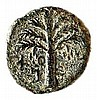 SHIMON BAR-KOKHBA, 132 – 135 CE Small bronze 16 mm, undated. Obverse: Bunch of grapes. Paleo-He