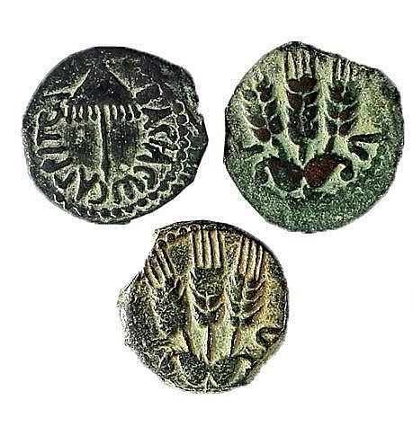 A LOT OF 3 BRONZE PRUTOT, AGRIPPA I  42 CE. Canopy / three ears of barley. Very Fine. Meshorer TJC 1