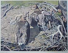 Bruce Lattig - Golden Eaglets