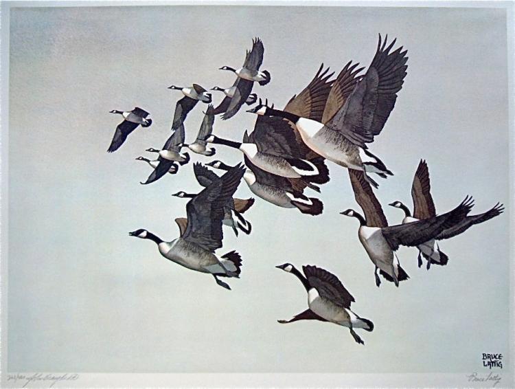 Bruce Lattig - Canadian Geese