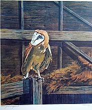 Bruce Lattig - Barn Owl