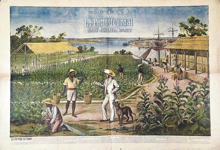 La culture du tabac le petit journal vers 1900 d cass - Culture du tabac en france ...