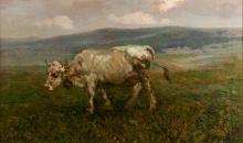 BEPPE CIARDI MUCCA AL PASCOLO GRAZING COW