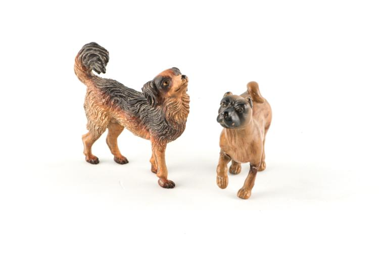 Un cane carlino e un cane volpino | A dog pug and a Pomeranian dog