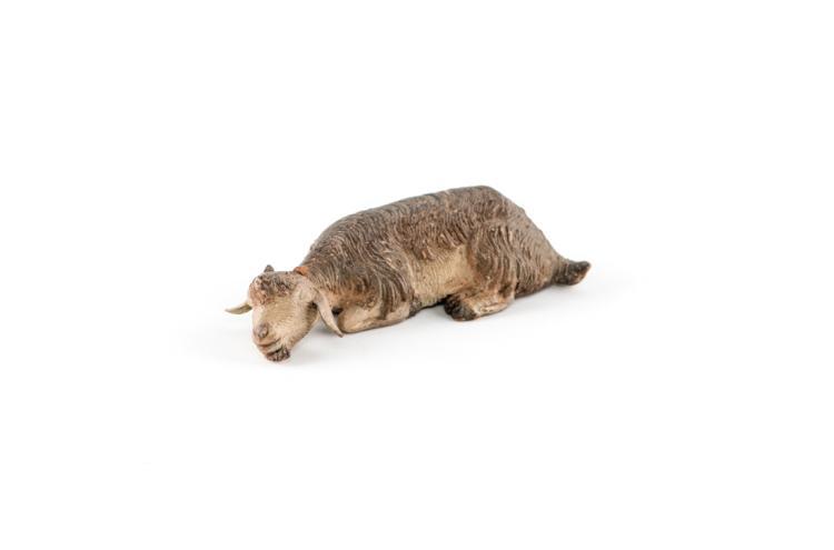 Capretta dormiente   Asleep goat