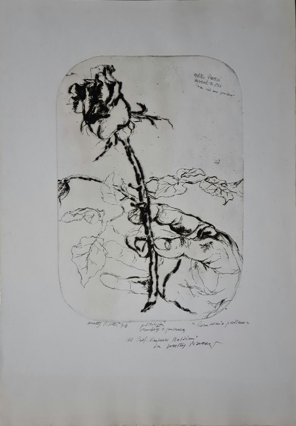 Piacesi Walter - La rosa, 1973