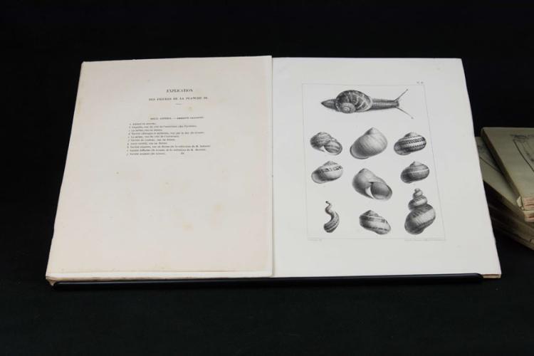 Dupuy D. - HISTOIRE NATURELLE DES MOLLUSQUES […]