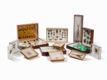 A Collection of 15 Entomological Display Cases, France, 20th C