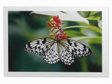 Damien Hirst, Paper Kite Butterfly on Oleander, Inkjet, 2011
