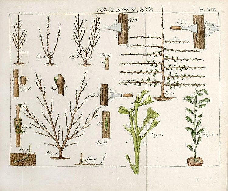 Poiteau audot figures pour l 39 almanach du bon jardinier for Jardinier 78