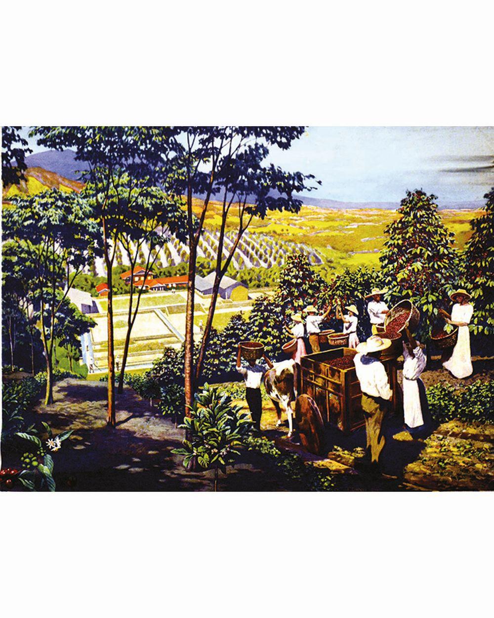 La Récolte du Café     vers 1900