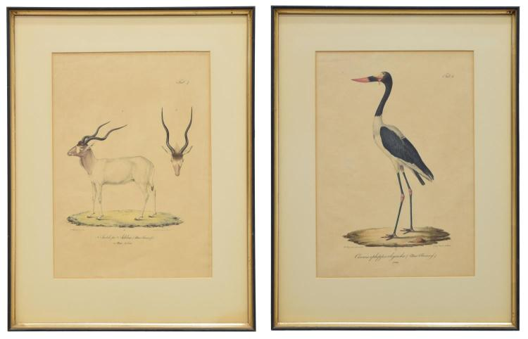 (2) FRAMED HAND-COLORED LITHOGRAPHS, E. RUPPELL