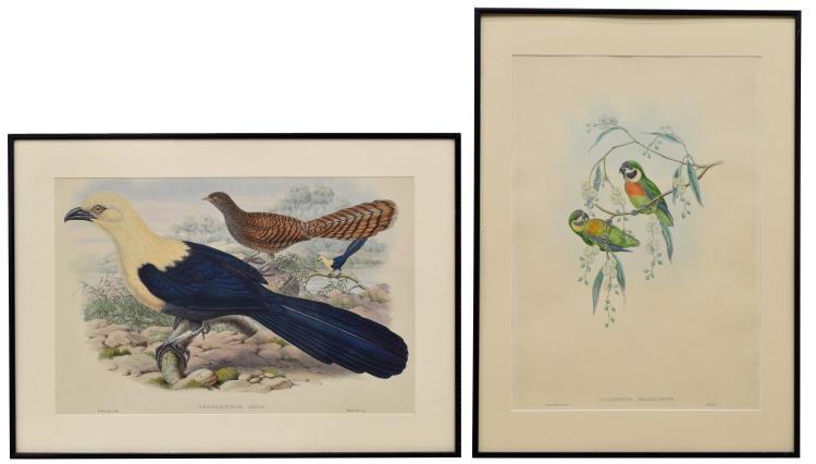 (2) J. GOULD 'BIRDS OF NEW GUINEA' LITHOGRAPHS