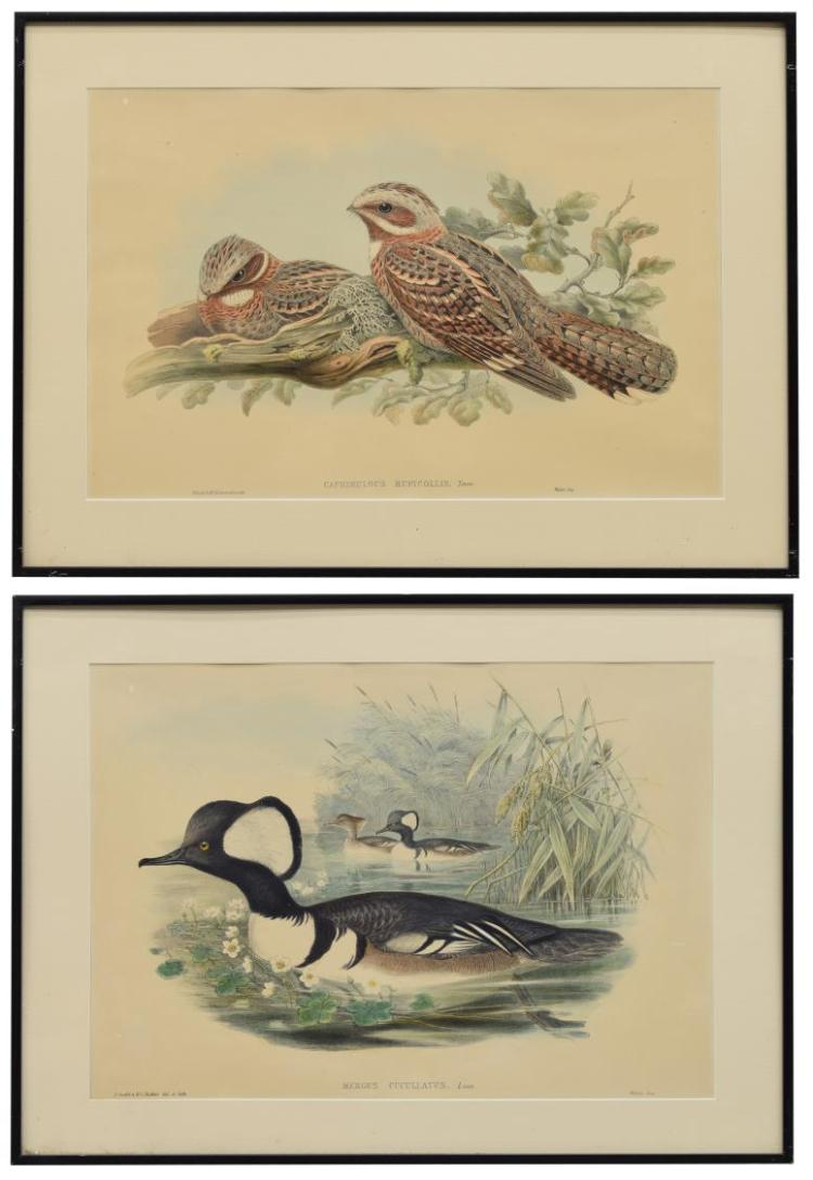 (2) J. GOULD 'BIRDS OF GREAT BRITAIN' LITHOGRAPHS