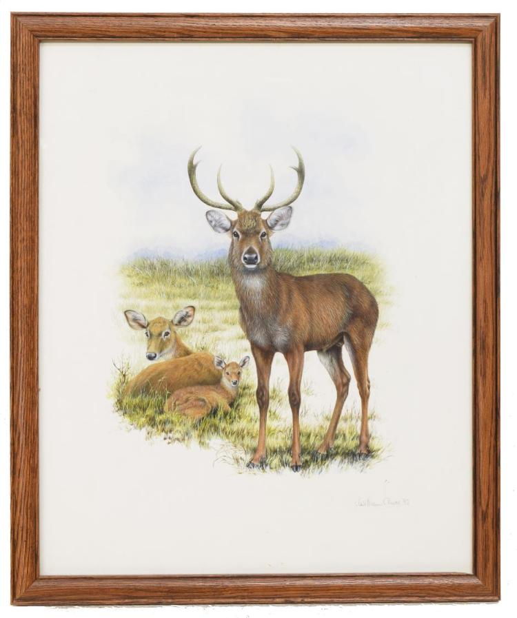 WILLIAM OLIVER NATURALIST WATERCOLOR PAINTING
